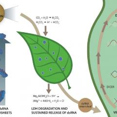 ARC Industrial Transformation Research Hub for Sustainable Crop Protection